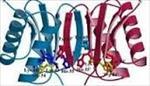 تحقیق-پیش-بینی-ساختار-دوم-پروتئین
