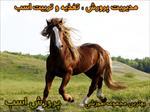 بسته-آموزش-تصویری-پرورش-اسب