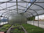 پاورپوینت-انواع-گلخانه
