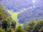 پاورپوینت-جنگل-محیط-زیست-و-اقتصاد-در-جنگل
