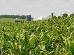 طرح-توجیهی-زراعت-گياهان-علوفه-ای