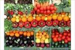 طرح-توجیهی-توليد-محصولات-خارج-از-فصل-در-گلخانه