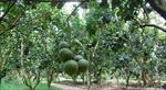 طرح-توجیهی-باغداری-به-همراه-عکس