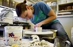 تحقیق-بررسی-مواد-سرامیکی-از-دیدگاه-مهندسی-شیمی