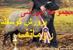 مجموعه-آموزشی-پرورش-گوسفند-رومانف