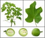 تحقیق-گیاه-شناسی