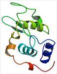 تحقیق-پروتئین-لیزوزیم-و-کارکردهای-آن