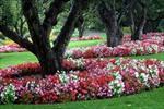 گزارش-کارآموزی-پرورش-و-تكثير-گل-هاي-فصلي-(گل-هاي-فضاي-آزاد)