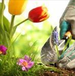 گزارش-کارآموزی-رشته-باغبانی