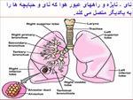 پاورپوینت-تنفس-هنگام-ورزش