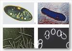 پاورپوینت-نقش-میکروب-ها-و-باکتری-ها-در-پاکسازی-محیط-زیست