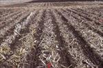 پاورپوینت-انواع-ماشین-آلات-و-روش-های-خاک-ورزی-و-کاشت