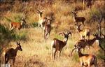 تحقیق-مناطق-حفاظت-شده-و-پارک-های-ملی