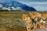 تحقیق-پارک-های-ملی-و-مناطق-حفاظت-شده-در-ایران