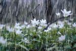پاورپوینت-و-تحقیق-باران