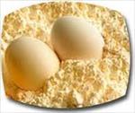 دانلود-طرح-توجیهی-پودر-تخم-مرغ