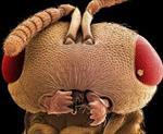 پاورپوینت-حشره-شناسی-پزشکی-(medical-entomology)