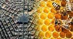 پاورپوینت-معماری-زنبورعسل