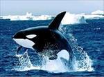 پاورپوینت-درس-انسان-طبیعت-و-معماری-با-موضوع-نهنگ