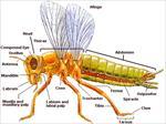 پاورپوینت-بررسی-جامع-حشرات-به-زبان-انگلیسی