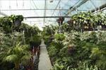 دانلود-طرح-توجیهی-پرورش-گل-و-گياه-در-گلخانه