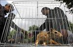 تحقیق-کنوانسیون-تجارت-بین-المللی-گونه-های-جانوران-و-گیاهان-وحشی-در-معرض-خطر-انقراض-و-نابودی-(cites)