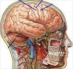 پاورپوینت-دستگاه-عصبی-مغز-و-نخاع