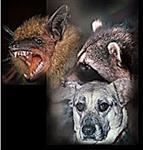 پاورپوینت-بیماری-هاری-(rabies)