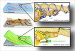 تحقیق-و-پاورپوینت-بررسی-کامپوزیت-های-پایه-سرامیکی-و-پایه-فلزی