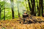 پاورپوینت-انواع-جنگل-ها-و-قانون-جنگلات