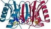 تحقیق پیش بینی ساختار دوم پروتئین