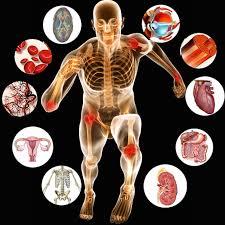 تحقیق فيزيولوژي متابوليسم