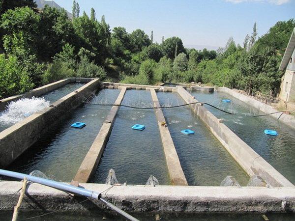 جزوه تکثیر و پرورش ماهی کپور