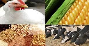 استاندارد ويژگي هاي چربي مورد استفاده در خوراك دام و طيور