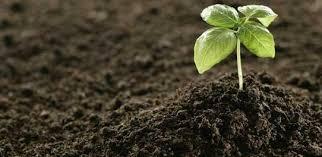 خاک های سولفات دار حل شونده در بستر سازه های آبی