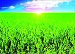 تحقیق-تأثیر-جنبه-های-مختلف-نور-بر-رشد-و-نمو-گیاهان