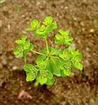 تحقیق-گیاه-شناسی-و-انواع-گیاهان