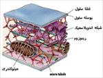 تحقیق-سنتز-پروتئین-توسط-ریبوزوم-ها