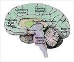 پاو وینت-نوروسایکولوژی-بالینی